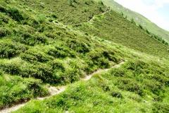 Muhsweg beim Bergersee