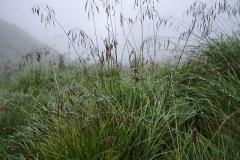 Nebel und Tau
